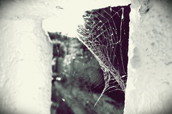 P1100217_spiderweb