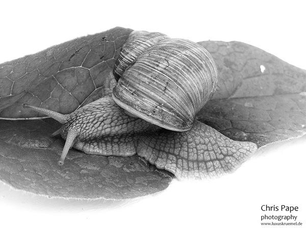 IMG_4414_Snail