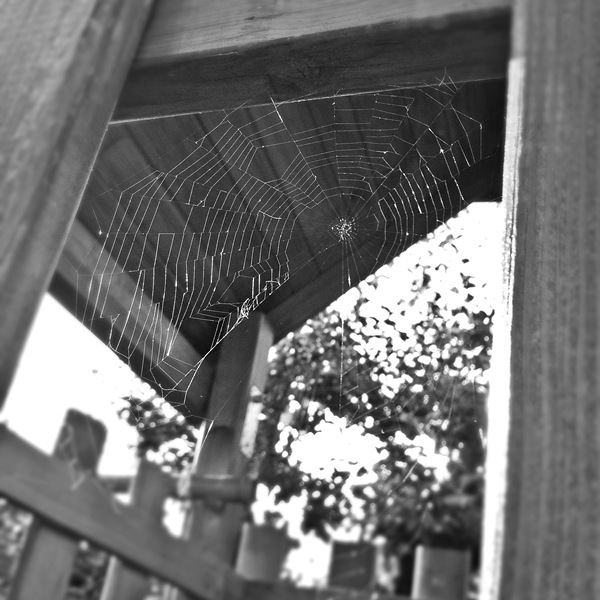 IMG_5389_spiderart