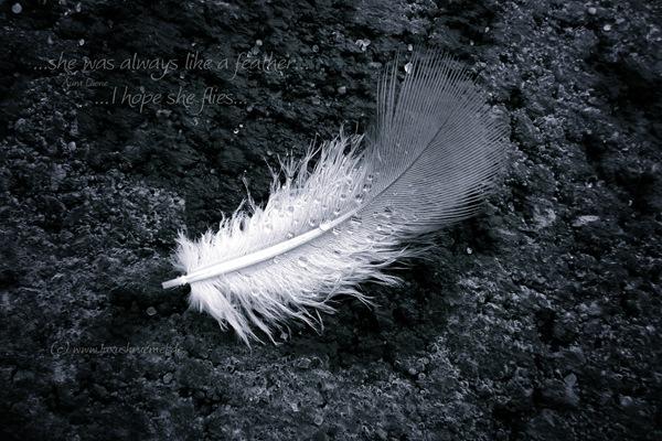 2012_10_12_15_21_P1150164_feather_bw_wm_Aura_Dione