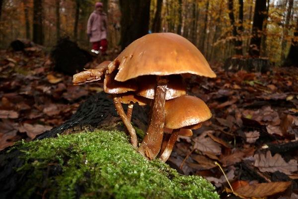 2012_11_11_16_51_P1150347_mushroom