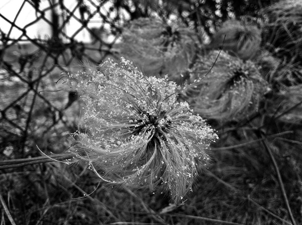 IMG_6825_Pflanze