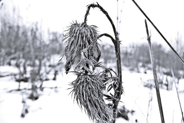 letztes_Winterbild
