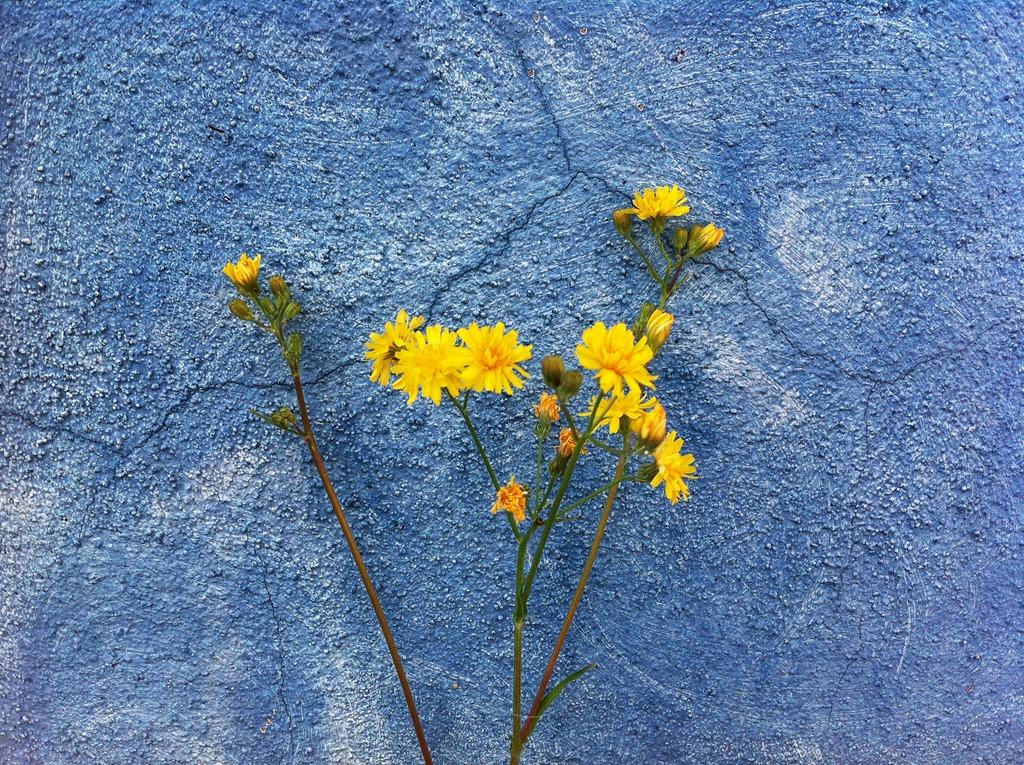 IMG_7366_gelb_blau