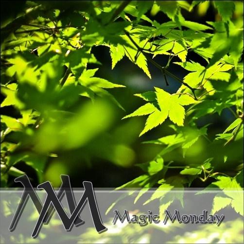 logo_magicmonday500px[1]