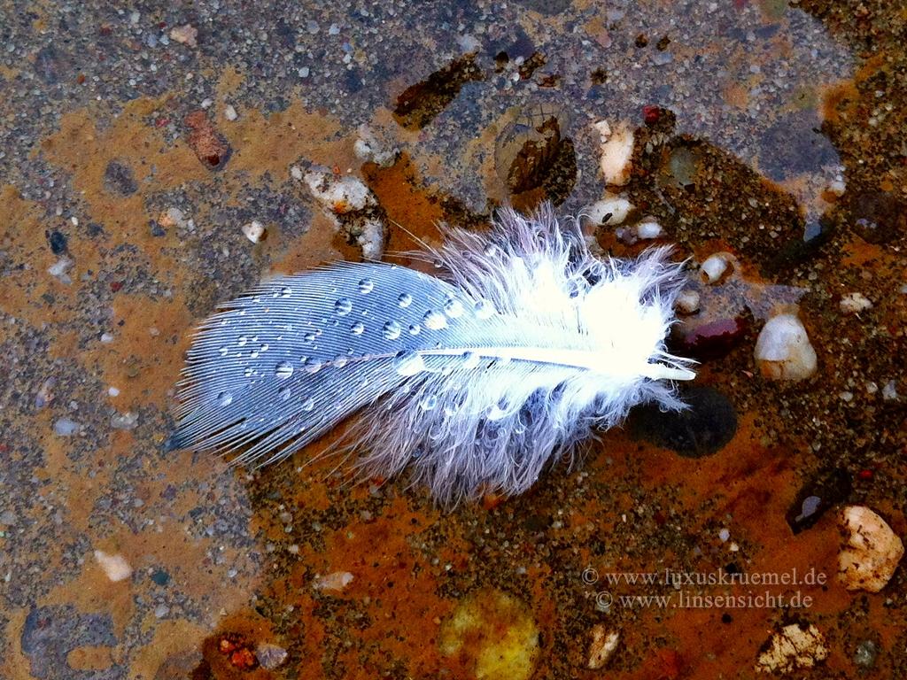 IMG_7036_feather_von_oben_1024